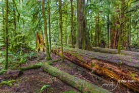 Cathedral Grove Vancouver Island-2